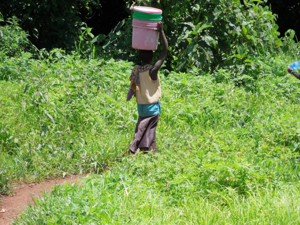Woman walking through green landscape, carrying empty buckets on her head